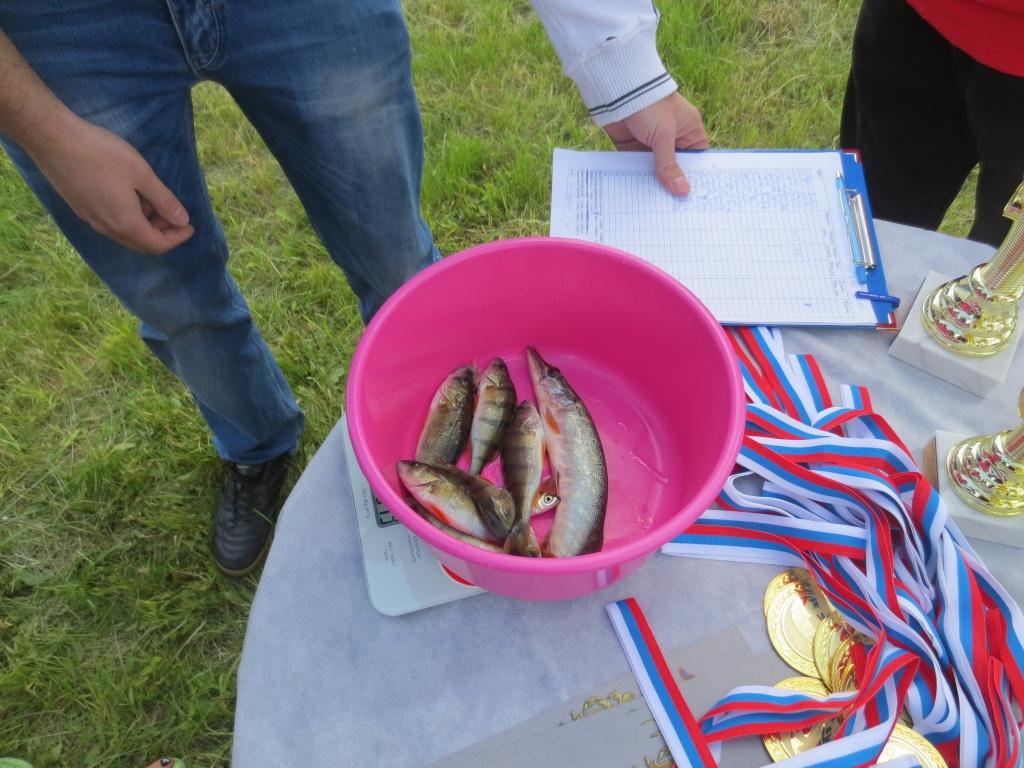 соревнования для любителей по рыбной ловле