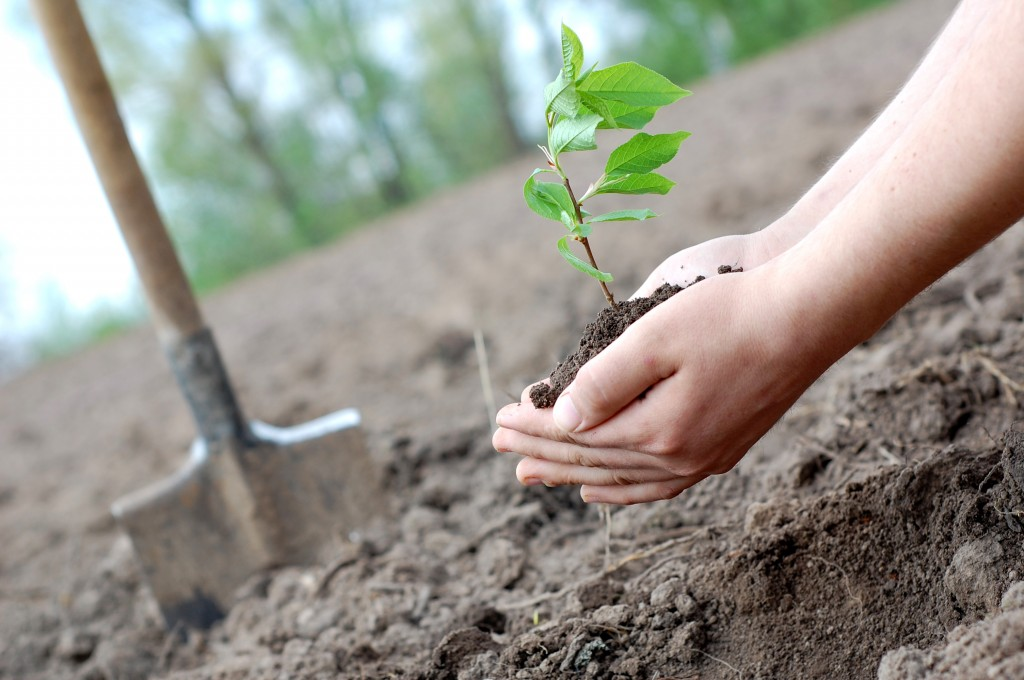 Как сажают дерево фото 892